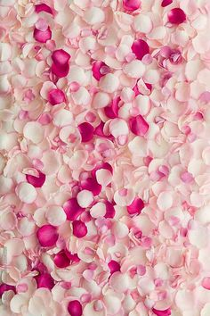 Rose petal background by Ruth Black - Stocksy United