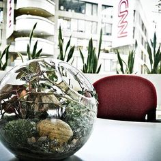 Terrariums are a great way to breathe life into dull corporate space. Bring life…