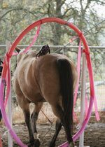 Horse Obstacle Course Ideas....so many creative ones! |Curly Horses website