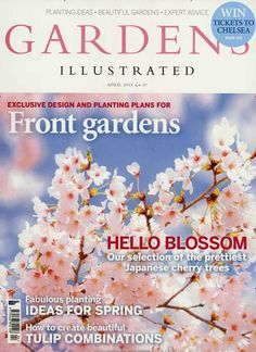 Hello blossom - Our