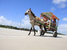 Charretes são o principal meio de transporte em Algodoal (Foto: Igor Mota/Amazônia Jornal)