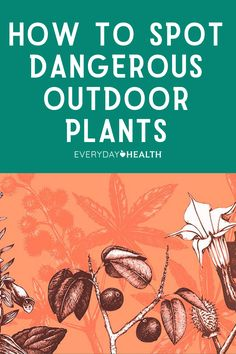 Whether you're picnicking in the park or lazing in your own backyard, you could be at risk of brushing up against a poisonous plant. Here's how to spot toxic plants and what you can do to protect yourself.
