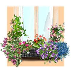 Projet aménagement jardin : Jardinière estivale