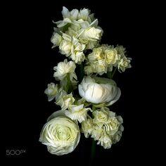 AROMATICS IN WHITE... by Magda Indigo on 500px