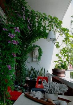 Small Balcony Design, Small Balcony Garden, Small Balcony Decor, Balcony Plants, Outdoor Balcony, Indoor Plants, Indoor Garden, Apartment Balcony Garden, Apartment Balcony Decorating