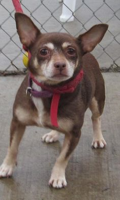 ADOPTED!!! COCOA...Found in CANTON, OHIO...  https://www.petfinder.com/petdetail/31106944/
