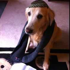 Jewish dog- why have I seen several of these on Pinterest?