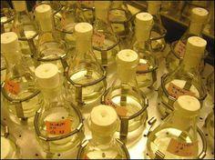 ¿Que tienen en común perfumes y pesticidas?