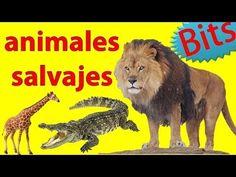 Animales Salvajes Para Niños    Con Sonidos + Palabras 1-7 años (BITs Lectura)