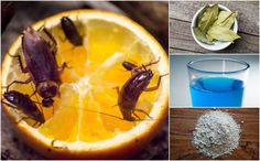 How To Get Rid Of Cockroaches: 11 Home Remedies That Really Work