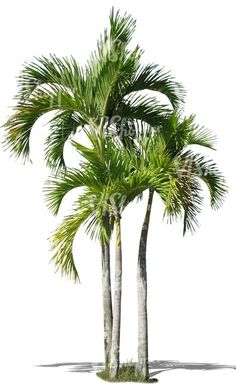 65 super ideas for tree plan png tropical plants