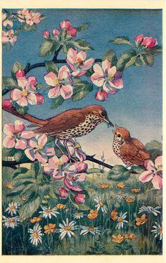 The Medici Society by Molly Brett The Early Bird Vintage Birds, Vintage Art, Zany Zoo, Animal Painter, Gouache, Wildlife Art, Children's Book Illustration, Bird Art, Beautiful Birds