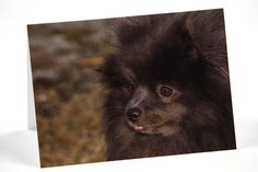 Pacific Northwest, Photo Greeting Cards, Chihuahua, Cute Dogs, Hdr, Menu, Etsy, Animals, Digital