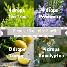 If the smell of cigarette smoke keeps lingering, try this simple trick to get rid of that scent! Combine these oils with 1 oz water in a spray bottle, and spray liberally around the affected area, make sure to shake well for each use. What is your favorite EO trick? #PurifySkinTherapy #EssentialOils #Health #Cleaning #CigaretteSmoke #Tips #Tricks #TeaTree #Rosemary #Lemon #Eucalyptus #LiveWell #Smell