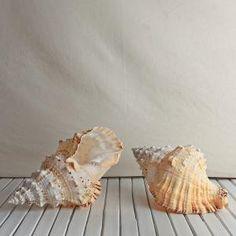 natural large shells nautical decor at Shades of Green Mornington