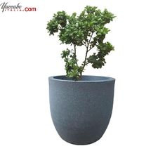 Buy Flower Planters & Pots Online in India at Best Price - Yuccabeitalia Flower Planters, Flower Pots, Planter Pots, Buy Flowers, Greenery, Home And Garden, Gardening, India, Nature