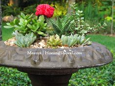How to Create a Succulent Bird Bath