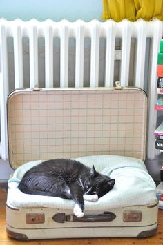 {kitty sleeping in a suitcase} such a simple way to make a cute-looking kitty bed!