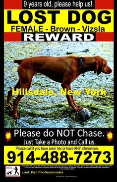 OptionsShareSendLike Timeline Photos  Lost Pet Professionals Page Liked · 22 hrs ·    HILLSDALE, New York Zoe - - Brown - Vizsla - (SHY)   Zoe went missing September 3rd in Hillsdale, NY off Springbrook Lane. Zoe is a 9 year old, female, Vizsla weighing about 45 lbs.