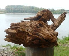 Natural Cedar Driftwood Sculpture Large Wooden by DivineDriftwood