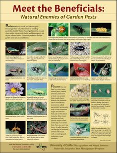 Natural Pest Control: 13 Enemies of Garden Pests Read more at http://www.realfarmacy.com/natural-pest-control-13-enemies-of-garden-pests/#8keLGZqy84btdWlY.99