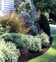 evergreen bushes, hide foundation #landscape #yard #planter