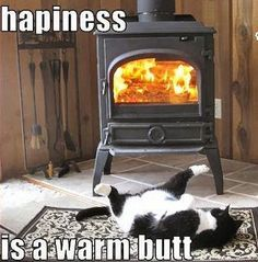 This is identical to my little kitty...I have posted pics like this on FB of my kitty lol