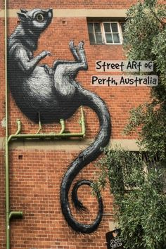 A collection of massive street art in Perth, Western Australia