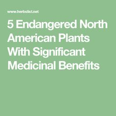 5 Endangered North American Plants With Significant Medicinal Benefits