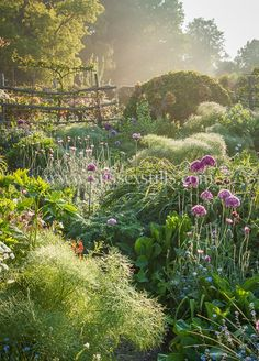 """Nicky Flint's photo """"Through the Garden"""" was taken at a home in East Sussex, U. in the early morning hours when """"a gentle mist softened the light and created a magical atmosphere. Check out the 2018 International Garden Photographer of the Year winners. East Sussex, Garden Wallpaper, Magic Garden, Garden Art, Olive Garden, Nature Aesthetic, Plantation, Garden Projects, Garden Ideas"""