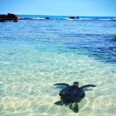 Kona - swimming with turtles - my favorite thing to do!