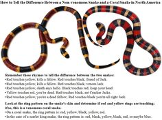 How to tell the Difference Between a Non-venomous Snake and a Coral Snake in North America