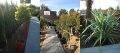 Paramount Plants has selected the very best type of plants to grow on a roof terrace, patio or balcony - choosing plants for this environment in the UK climate.