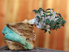 Euphorbia ambovombensis | Flickr - Photo Sharing!