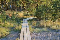 Hangon-Tulliniemen-polku.jpg (640×426)