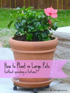 #gardening #containergardens   I have a large yard that I like to fill with flowers and plants. So, when it comes to filling the multiple…