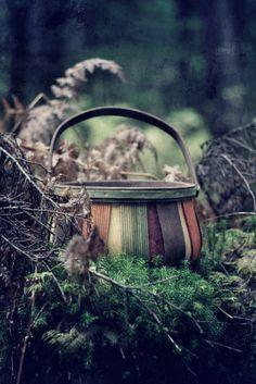 Mushroom harvesting basket - PhotoArt Imagery