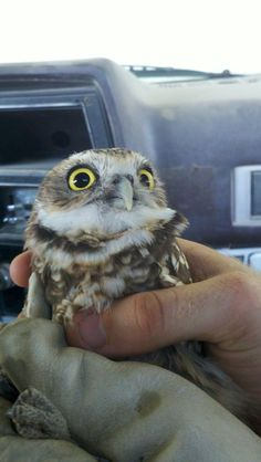 Baby owl: unhand me, you fiend!