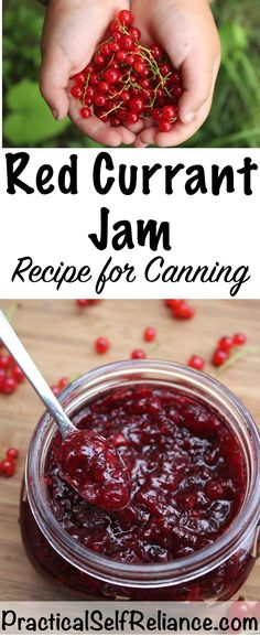 Homemade Red Currant Jam — Practical Self Reliance – Amazing World Food and Recipes Red Currant Recipe, Red Currant Jam, Currant Recipes, Jelly Recipes, Jam Recipes, Canning Recipes, Drink Recipes, A Food, Food And Drink