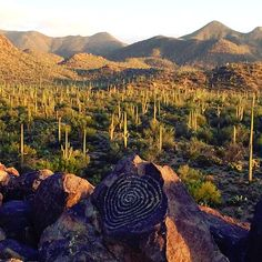 Petroglyphs in Saguaro National Park. Click on the pin to see other ways to have an Outdoor Adventure in the Tucson area.  (Photo via Instagram by @maric22)