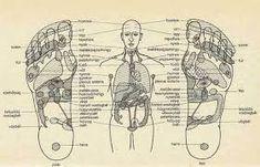 """Képtalálat a következőre: """"az emberi test belső szervei"""""""
