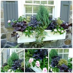 Container Gardening - An Answer To Minimal House For Increasing Vegetation Summer Window Boxes Window Box Flowers, Flower Boxes, Container Plants, Container Gardening, Vegetable Gardening, Organic Gardening, Succulent Containers, Container Flowers, Bokashi
