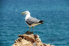Seagull Bird by Hichemou Photographer , Colorism And Designer on 500px