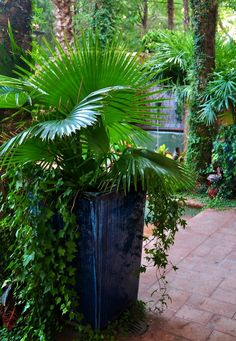 Container your plants, not your enthusiasm for Fis...