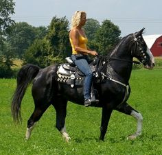Breed: Tennessee Walking Horse