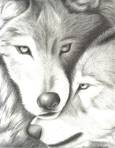 Wolves Nuzzling by EvaJanus on DeviantArt Pencil Art Drawings, Cool Art Drawings, Realistic Drawings, Wolf Photos, Wolf Pictures, Animal Sketches, Animal Drawings, Tattoo Homme, Wolf Sketch