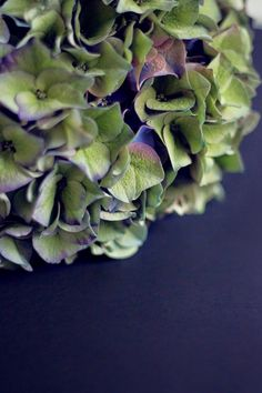 Hortensia Succulents, Plants, Succulent Plants, Plant, Planets