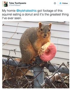 "DO YOU FEEL BETTER?! | 20 Pictures That Will Make You Say ""Damn, Squirrel, Give Me Some Of That"""