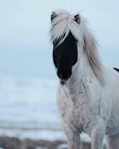 Rare & Beautiful Horse Markings - COWGIRL Magazine Some horses are so unique that they stop you in your tracks. They have a rare color or marking that sets them apart from ordinary horses. Most Beautiful Horses, All The Pretty Horses, Animals Beautiful, Unique Animals, Rare Horses, Wild Horses, Black Horses, Horses And Dogs, Cute Baby Animals