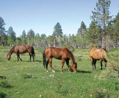 Tracking Devices for Horses